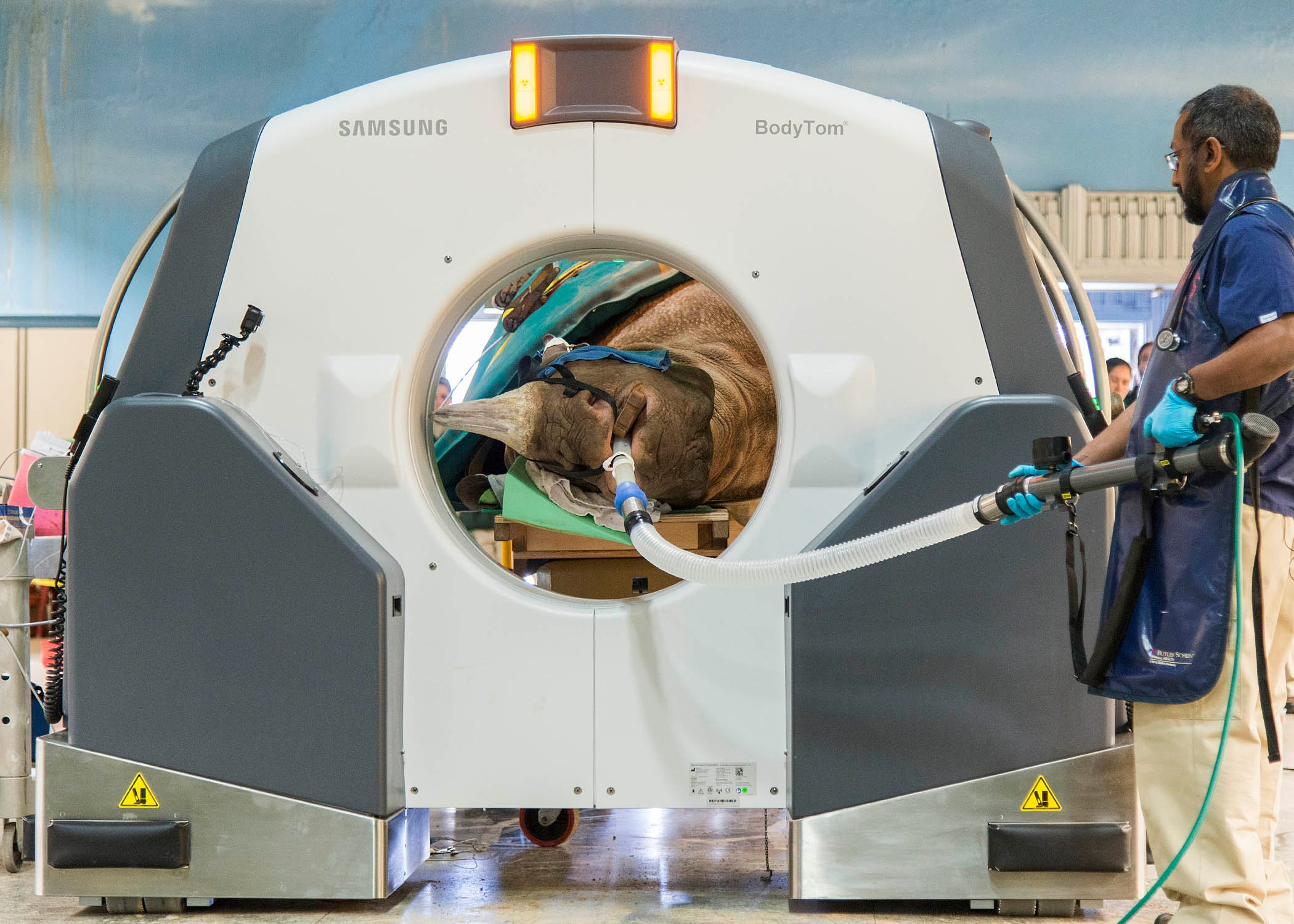 Black Rhinoceros at Brookfield Zoo Undergoes Portable CT Scan