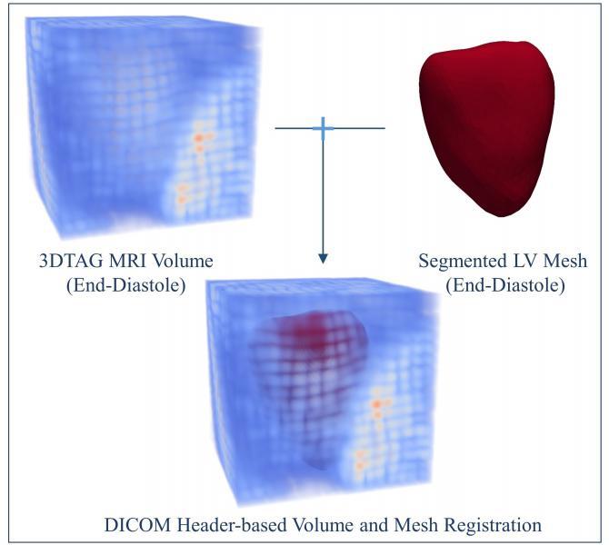 The 3DTag MRI volume and segmented LV mesh