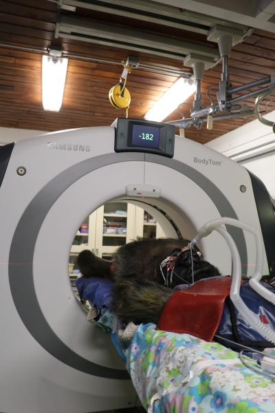 The CT scanner being used in Gigi's procedure is NeuroLogica's BodyTom, a battery-powered, portable, 32-slice CT scanner.