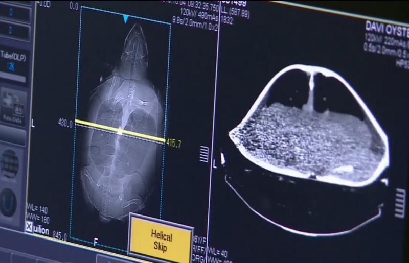 CT systems sea turtle oyster university minnesota sea life aquarium
