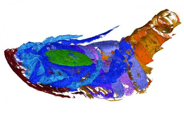 Through computed tomography (CT) imaging, WVU geologist James Lamsdell led a team that found evidence of air breathing in a 340 million-year-old sea scorpion, or eurypterid. This is one of the scans of the specimen