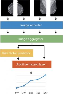 The four standard views of an individual mammogram were fed into Mirai. The image encoder mapped each view to a vector, and the image aggregator combined the four view vectors into a single vector for the mammogram. In this work, we used a single shared ResNet-18 as an image encoder, and a transformer as our image aggregator. The risk factor predictor module predicted all the risk factors used in the Tyrer-Cuzick model, including age, detailed family history, and hormonal factors, from the mammogram vector.