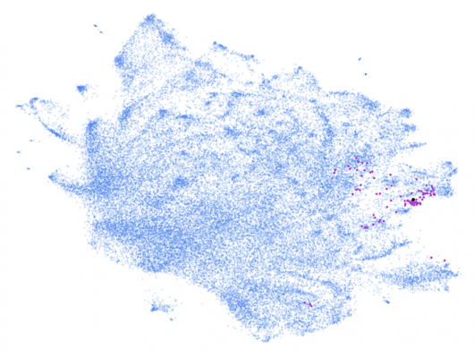 Mount Sinai scientists created an AI-based, automated system that learns to read patient data from electronic health records. Here the system identified dementia cases (purple dots) from a database of nearly 2 million patients (blue dots). Courtesy of the Glicksberg lab, Mount Sinai, N.Y., N.Y.