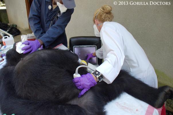 Gorilla Doctors Ultrasound System Toshiba America Medical Systems Viamo