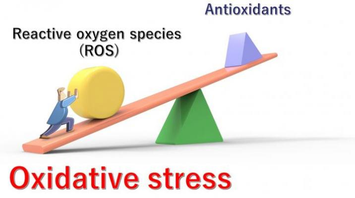 """Unhealthy lifestyles, various diseases, stress, and aging can all contribute to an imbalance between the production of ROS and the body's ability to reduce and eliminate them. The resulting excessive levels of ROS cause """"oxidative stress""""."""