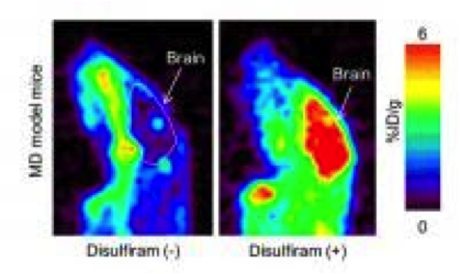PET imaging in Menkes disease model mice