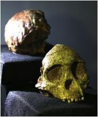 SA's Taung Child's Skull CT Systems