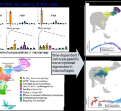 #coronavirus #COVID19 #pandemic A KAIST immunology research team found that a specific subtype of macrophages that originated from blood monocytes plays a key role in the hyper-inflammatory response in SARS-CoV-2 infected lungs, by performing single-cell RNA sequencing of bronchoalveolar lavage fluid cells