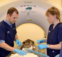 Brookfield Zoo, CT, computed tomography, clouded leopard, C-arm fluoroscopy unit, AMITA Health